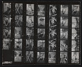 View Contact sheet with images of Senga Nengudi performance digital asset number 0