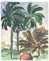 View Palm Trees at Senado digital asset number 0