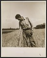 View Farmer at the Hightstown homestead project digital asset number 0