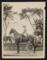 View Photograph of Mary Tarbell Schaffer on horse, Imperial Princess, at Tarbell House in New Castle, New Hampshire digital asset number 0