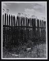 View <em>Fruit jars being sterilized on old lady Graham's back fence in berry season</em> digital asset number 0