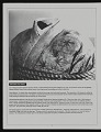 View Exhibition catalog for <em>(en)Gendered Visions: Race, Gender and Sexuality in Asian American Art</em> digital asset: page