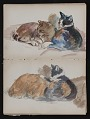 View Sketchbook of cats digital asset: pages 27