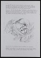 View Picasso cat: the cat who had his nose out of joint digital asset: page 2