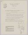 View Welcome letter in Spanish from the National Council of Negro Women, Inc. digital asset number 3