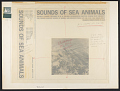 View Sounds of sea animals. Vol. 2 [sound recording] : Florida / recorded by W.N. Kellogg digital asset number 0