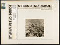 View Sounds of sea animals. Vol. 2 [sound recording] : Florida / recorded by W.N. Kellogg digital asset number 1