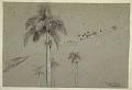 View Royal Palm, Cuba digital asset number 1