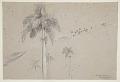 View Royal Palm, Cuba digital asset number 0