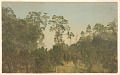 View Landscape with Trees, Jamaica digital asset number 0