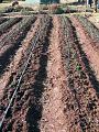 View Drip Irrigation System digital asset number 2