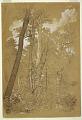 View Chestnut Trees on Goat Island, Niagara River, New York digital asset number 0