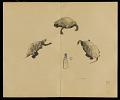 View Album: Miscellaneous Sketches digital asset number 68