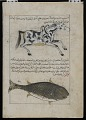 View Water Horse (Faras al-Ma), Whale (Qatus), from <em>Aja'ib al-makhluqat</em> (Wonders of Creation) by al-Qazvini digital asset number 0