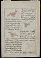 View Starling (Zurzur), Falcon (Zamaj), Quail (Samani), from <em>Aja'ib al-makhluqat</em> (Wonders of Creation) by al-Qazvini digital asset number 1