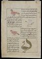 View Whistler (Safir), Sea Bird (Ta'ir al-Bahr), Peacock (Ta'wa'us), from <em>Aja'ib al-makhluqat</em> (Wonders of Creation) by al-Qazvini digital asset number 0