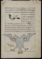 View Magpie ('Aq'aq), A Miraculous Bird ('Anqa), from <em>Aja'ib al-makhluqat</em> (Wonders of Creation) by al-Qazvini digital asset number 0