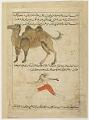 View Folio from <em>Aja'ib al-makhluqat</em> (Wonders of Creation); recto: Crossbreeds: Bactrian Camels (al-Bukhti), Man/Bear (Mutawallid bayan al-Insan wa al-Dubb); Verso: Wolf/Hyena (Mutawallid bayan al-Dhib wa al Dabu), Dog/Wolf (Mutawallid bayan al-Kalb wa digital asset number 0