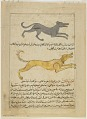 View Folio from <em>Aja'ib al-makhluqat</em> (Wonders of Creation); recto: Crossbreeds: Bactrian Camels (al-Bukhti), Man/Bear (Mutawallid bayan al-Insan wa al-Dubb); Verso: Wolf/Hyena (Mutawallid bayan al-Dhib wa al Dabu), Dog/Wolf (Mutawallid bayan al-Kalb wa digital asset number 1