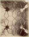 View Photographs of the Peacock Room at 49 Prince's Gate, London 1892 digital asset number 2