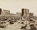 View Photographs of Palmyra, Syria digital asset number 25