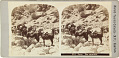 View Stereocards of Iran circa 1870s digital asset number 1