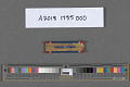 View Ribbon Bar, Distinguished Service Cross, United States Army Air Forces digital asset number 2