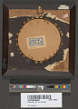View Balloon Plaque digital asset number 3
