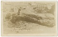 View <I>Chared Negro Killed in Tulsa Riot 6-1-1921</I> digital asset number 0