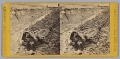 View Stereograph of a deceased Confederate soldier in a trench digital asset number 0