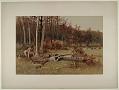 View A Wild Turkey Hunt digital asset: A Wild Turkey Hunt