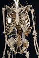 View YORICK, The Bionic Skeleton digital asset number 0