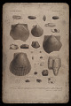 """View Lithographic printing stone """"Australian Fossils, Plate 9"""" digital asset number 0"""