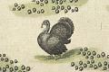 View Novi Belgii, Novaeque Angliae nec non partis Virginiae Tabula... digital asset: turkey detail of GA*24319