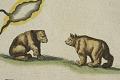 View Novi Belgii, Novaeque Angliae nec non partis Virginiae Tabula... digital asset: Bears detail