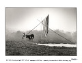 View Tom Law putting up the first tipi at Woodstock, Yasgur's cow looking on. Bethel, New York, 1969 digital asset number 1