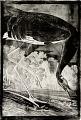 View Whooping Crane, <I>Grus Americana</I> digital asset number 1