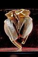 View Liotta-Cooley Artificial Heart digital asset: Liotta-Cooley artificial heart