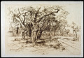 View An Apple Orchard -- Easthampton, L. I. digital asset number 0