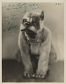 View [Al Latell in a dog costume : black-and-white photoprint] digital asset: [Al Latell in a dog costume : black-and-white photoprint].