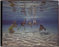 View Kids swimming underwater / Cyprus Gardens Fla [sic] [chromogenic color transparency] digital asset: Kids swimming underwater / Cyprus Gardens Fla [sic] [chromogenic color transparency], 1979.