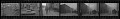 View Civil Disturbances '68 [sic] [cellulose acetate photonegative] digital asset: Civil Disturbances '68 [sic] [cellulose acetate photonegative].