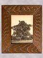 View Framed Photograph of a Chestnut Tree digital asset number 0