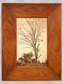 View Framed Photograph of an American Black Walnut Tree digital asset number 0