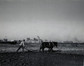 View Photographic History Collection: Carl Mydans digital asset: Lucius Washington plowing a field with two mules before the Dallas skyline