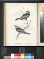 "View Lithograph of ""Indian Antiquities"" pottery artifacts digital asset: ""Calliste Cyanicollis [D'orbingy] adult male and Calliste Larvata [Du Bus] adult male"" / Plate XVIII"