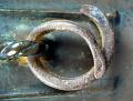 View Mortar digital asset: Mortar, detail