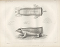 "View Lithograph of ""Indian Antiquities"" pottery artifacts digital asset: ""Chlamyphorus Truncatus"" / Plate XI"