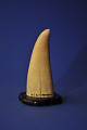 View Scrimshaw Sperm Whale Tooth, mid-late 19th Century digital asset number 1