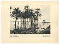 View Egypt: Dakka, The Temple digital asset: Rotogravure, verso, Egypt: Dakka, Palm-trees in high water